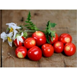 Litchi Tomato 5000 Seed - Morelle de Balbis