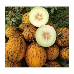 Dalaman Melone frische Samen