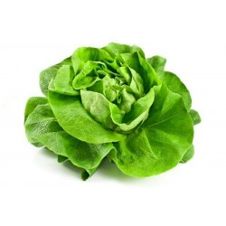 Lettuce Seeds May Queen