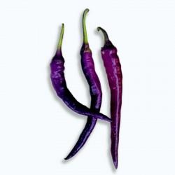 Long Purple Cayenne Chili Samen