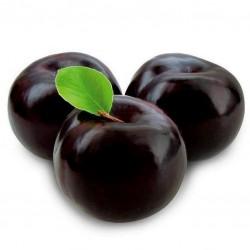 Sweet Black Plum BLACK BEAUTY Seeds
