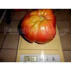 Giant Beefsteak Greek Tomato Seeds PREVEZA
