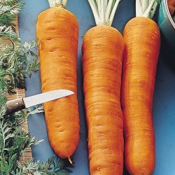 Καρότο σπόροι Autumn King