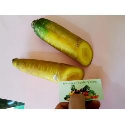 Σπόροι καρότου Solar Yellow