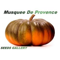 Sementes de Abóbora Musquée de Provence ou Moscata de Provenza