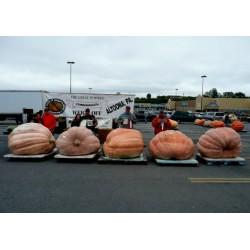 Sementes De Guinness Abóbora Gigante (824.86 kg)