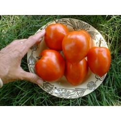 Sementes De Tomate Amish Paste