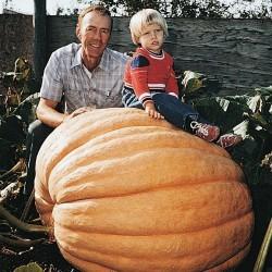 GOLIATH Giant Pumpkin Seeds