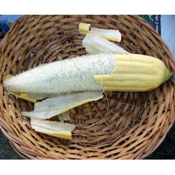 Gourd Seeds Luffa Sponge (Luffa aegyptiaca)
