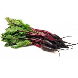 """Beetroot Seeds """"Cylindra"""""""