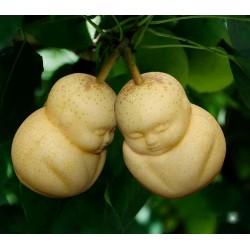 Stampo di frutta sotto forma di Buddha, pera, melone