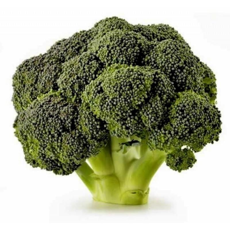Sementes de Brócolis Corvet