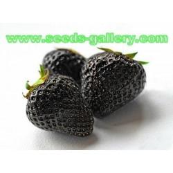 Graines exotiques rares Fraise Noir