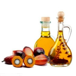 African Oil Palm Seeds (Elaeis guineensis)