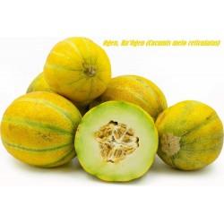 Ogen Melon