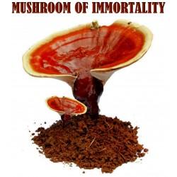 Lingzhi Mushroom Or Reishi Mushroom, Mycelium, Spores, Seeds
