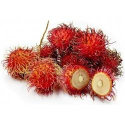 Rambutan Frön (Nephelium lappaceum) exotiska frukter