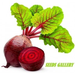Beetroot 1000 Seeds - Egyptian