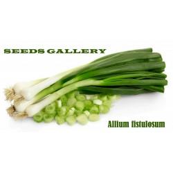 Welsh Onion Seeds (Allium fistulosum)