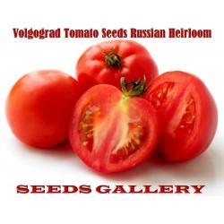 Volgograd Tomato Seeds Russian Heirloom