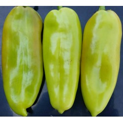 Paprika Dukat Seme