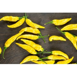 Aji Pineapple Chili Pepper Seeds