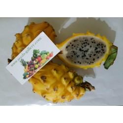 Dragon Fruit Yellow Seeds - Pitaya, Pitahaya Fruit