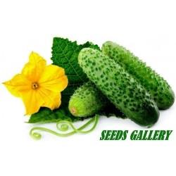 Paris Comissom Cucumber Seeds