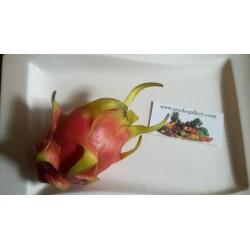 Drachenfrucht Pitahaya Samen