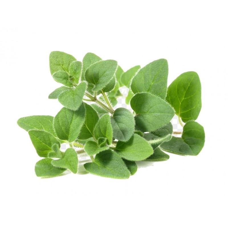 Herb Seeds Marjoram Sweet