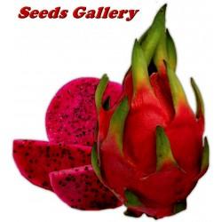 Pitaya Fruit, Pitahaya Fruit, Dragon Fruit Seme - Zmajevo Voce sa crvenim mesom