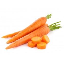 20g - 14.000 Graines de carotte Danvers 8.5 - 3