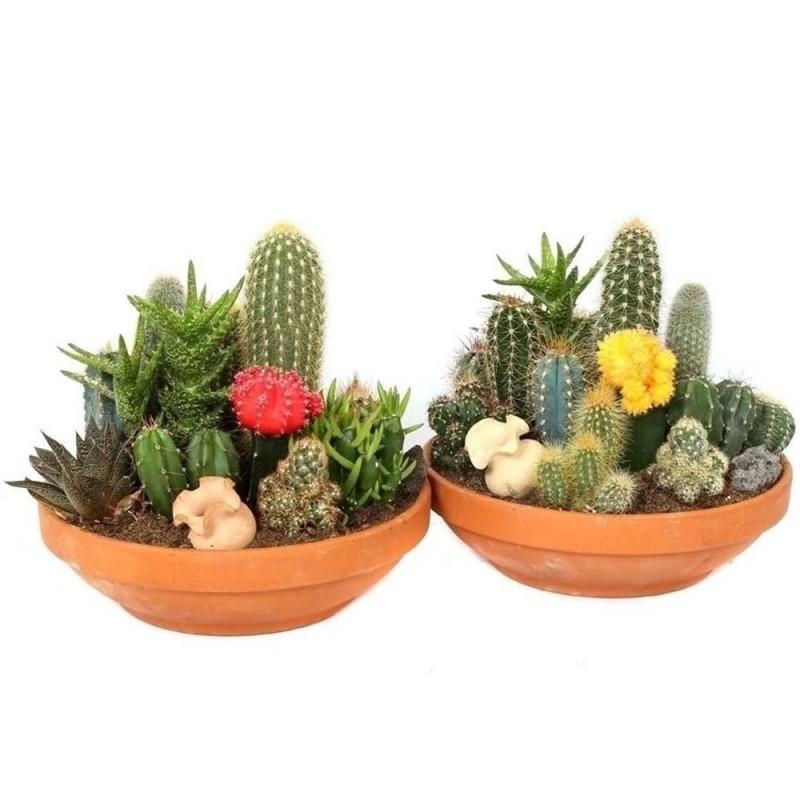 Sementes de Cactus Mix - Cactos Ornamentais 2.25 - 3
