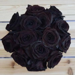 Black Rose Seeds Rare 2.5 - 3