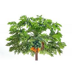 Sweet Tropical Carica Papaya-pawpaw Seeds