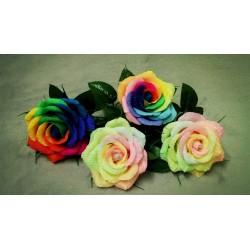 Rainbow Rose Seeds 2.5 - 3