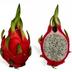 Dragon Fruit Rare Exotic Seeds Health Fragrant 2.35 - 6
