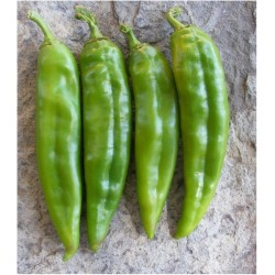Semi di peperoncino Numex Big Jim 1.75 - 4
