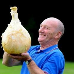 Giant Onion Seeds Robinsons Mammoth 2 - 2