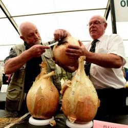 Giant Onion Seeds Robinsons Mammoth 2 - 1
