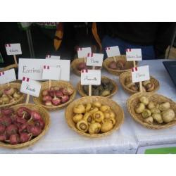 Maca - Maka Seme (Lepidium meyenii) 2.2 - 6