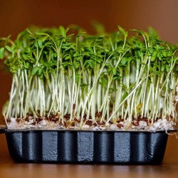Garden Cress Lettuce Seeds 1.45 - 1