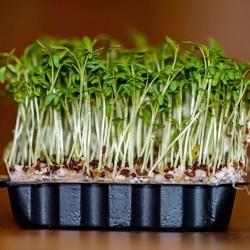 Graines de Cresson (Lepidium sativum) 1.45 - 1