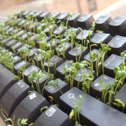 Garden Cress Lettuce Seeds 1.45 - 3