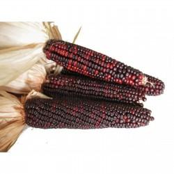 Sementes de Milho Vermelho Bloody Butcher 1.95 - 3