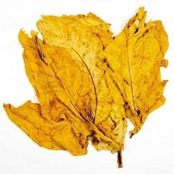 Hav. Gold Tobacco Seeds - Smooth Very Rare