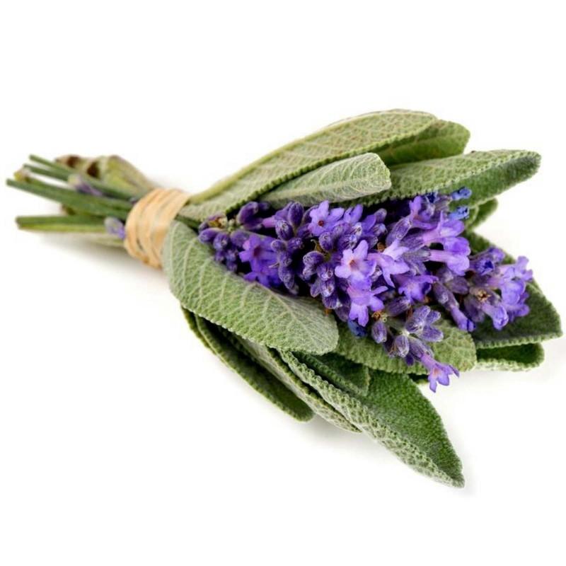 Sementes de Salvia, Salva 1.95 - 4