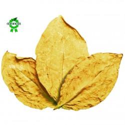 Sementes de Tabaco Virginia Gold 1.75 - 2