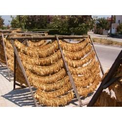 Sementes de Tabaco Virginia Gold 1.75 - 4