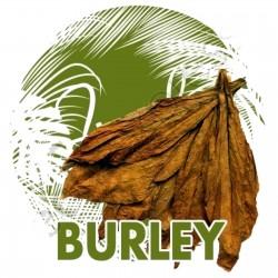Sementes Burley Tobaco cacau como aroma 1.95 - 1